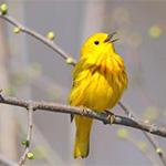 2018 Speaker Series State of the Birds