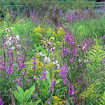 2018 Speaker Series Wildflowers of Forests and Meadows