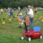 Pumpkin Day at Bourne Farm