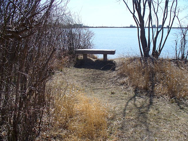 Salt Pond Bench