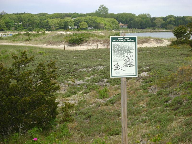 Salt Pond Dunes