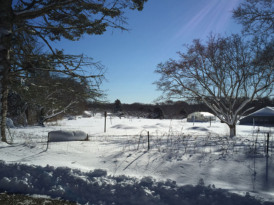 Peach Tree Farm in winter